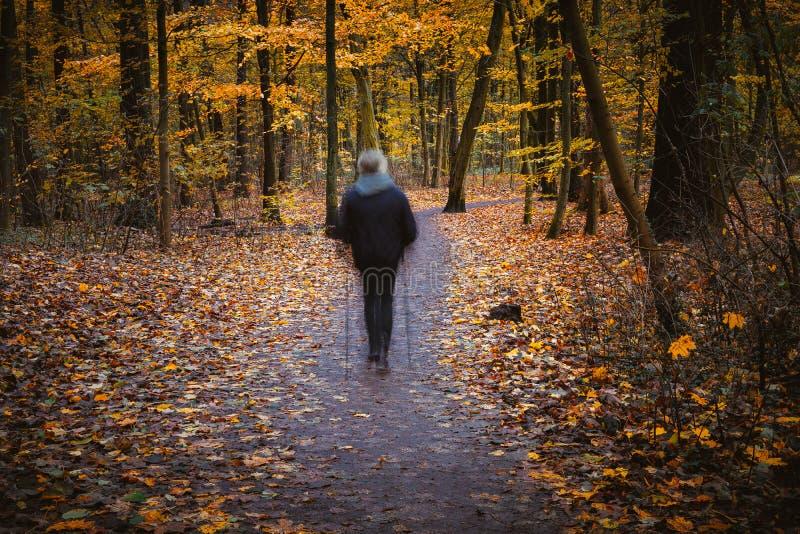 Figura fantasmal del alza en cuadrado otoñal, paisaje del bosque del otoño, árboles con las hojas amarillas y callejones fotografía de archivo libre de regalías