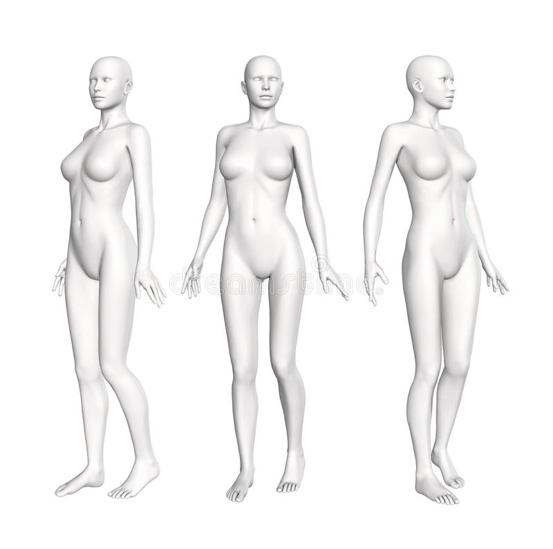 Figura femenina de la anatomía libre illustration