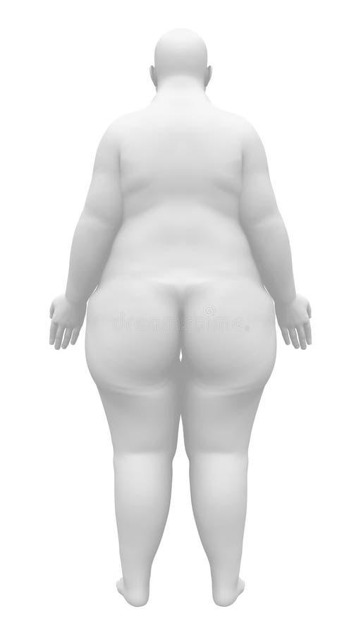 Figura Femenina De La Anatomía Obesa - Visión Trasera Stock de ...