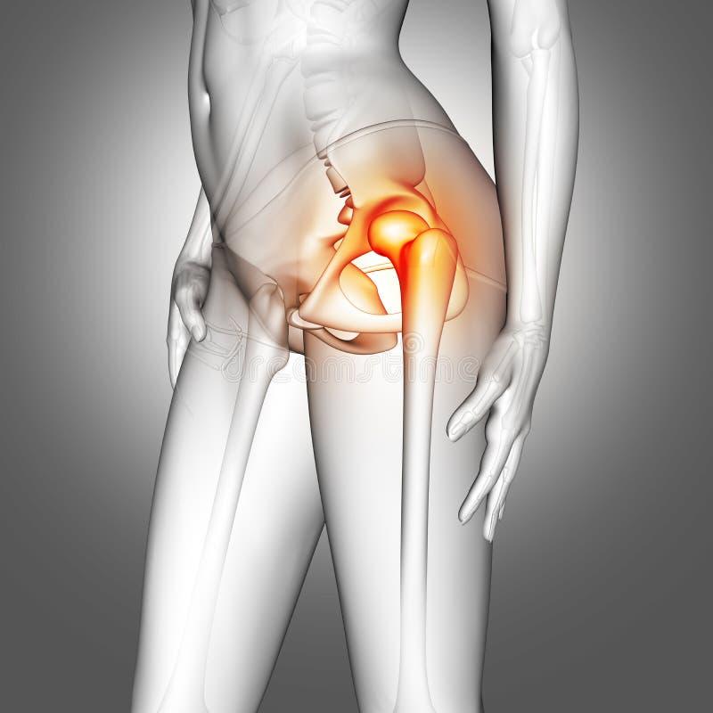Figura Médica Femenina 3D Con El Hueso De La Cadera Destacado Stock ...