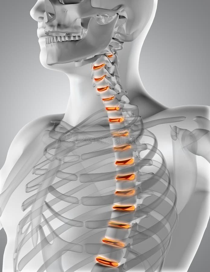 figura médica masculina 3D con la espina dorsal destacada stock de ilustración