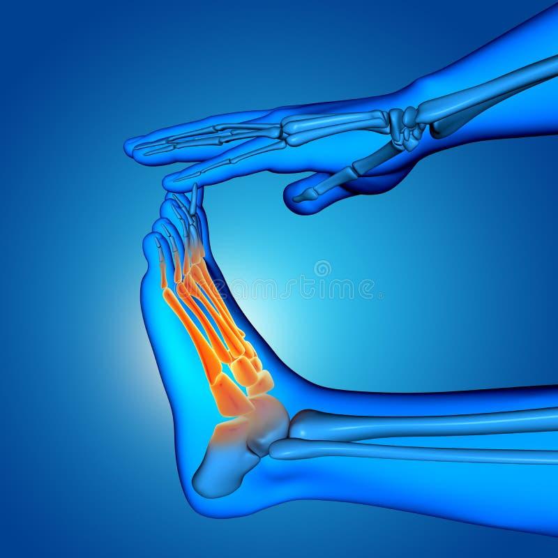 figura medica maschio 3D con la fine su del piede con il highligh delle ossa illustrazione vettoriale