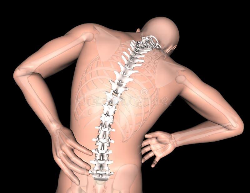 figura medica maschio 3D con la spina dorsale evidenziata royalty illustrazione gratis
