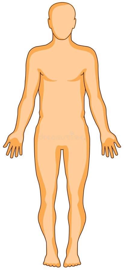 Figura umana di anatomia illustrazione vettoriale