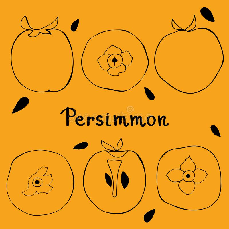 Figure silhouette of persimmon. View from above, whole persimmon, cut persimmon royalty free illustration
