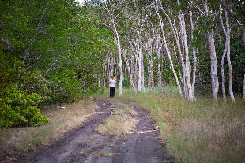 Figure On A Walking Track Into Bushland. A figure at the end of a walking track in a heavily wooded forest royalty free stock photography