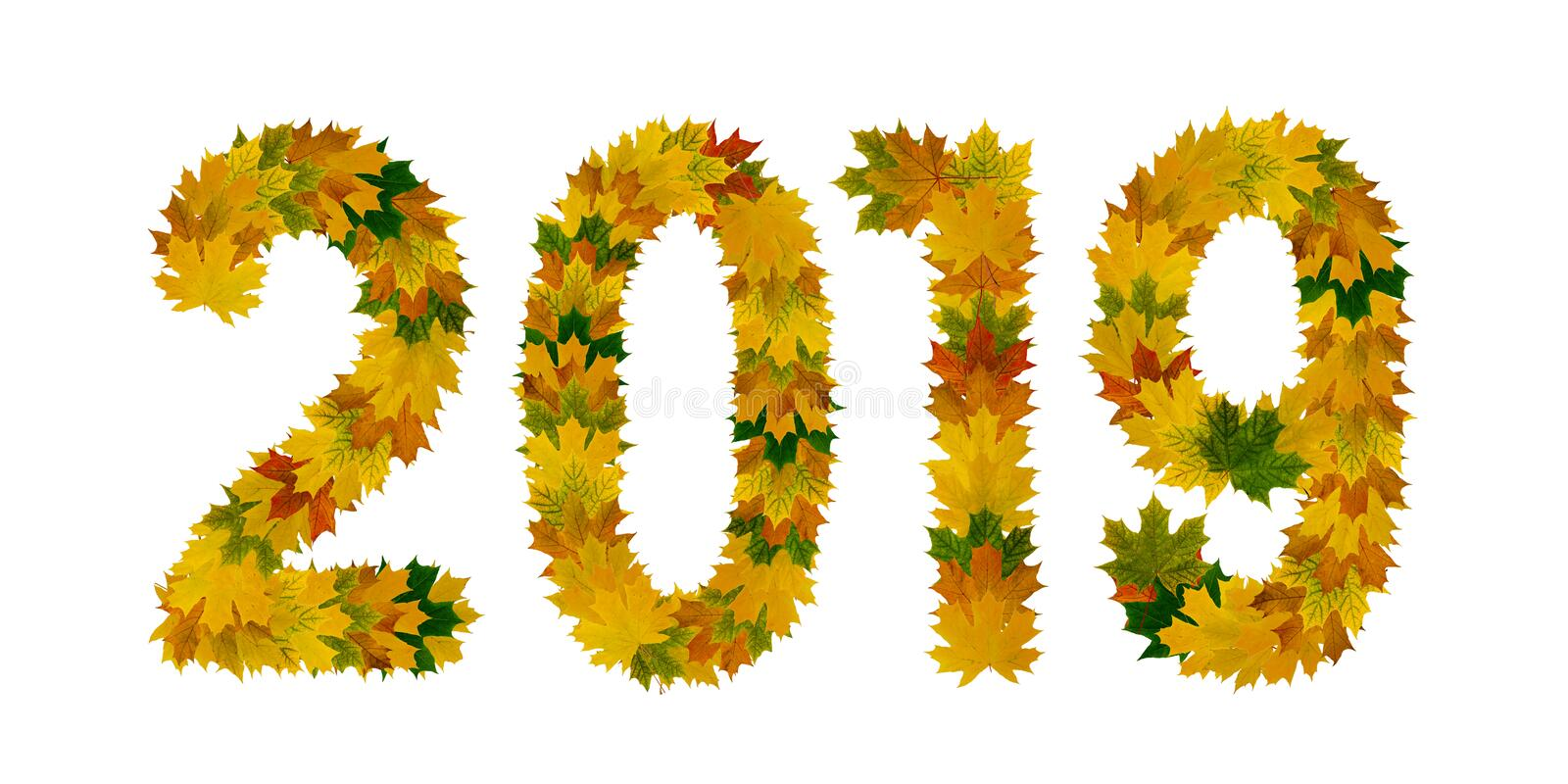 Figures 2019 from yellow, green and orange maple autumn leaves close-up. Isolate on white background stock images