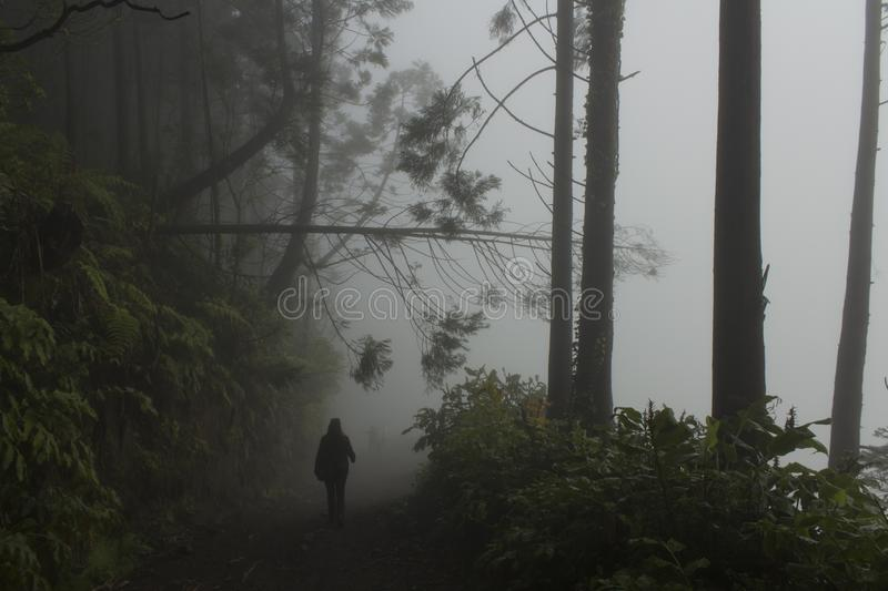 Figurine walks to others in the misty path who have past the fallen tree at the Sete Cidades Caldera`s wall. The Sete Cidades Caldera is a huge place with stock photography