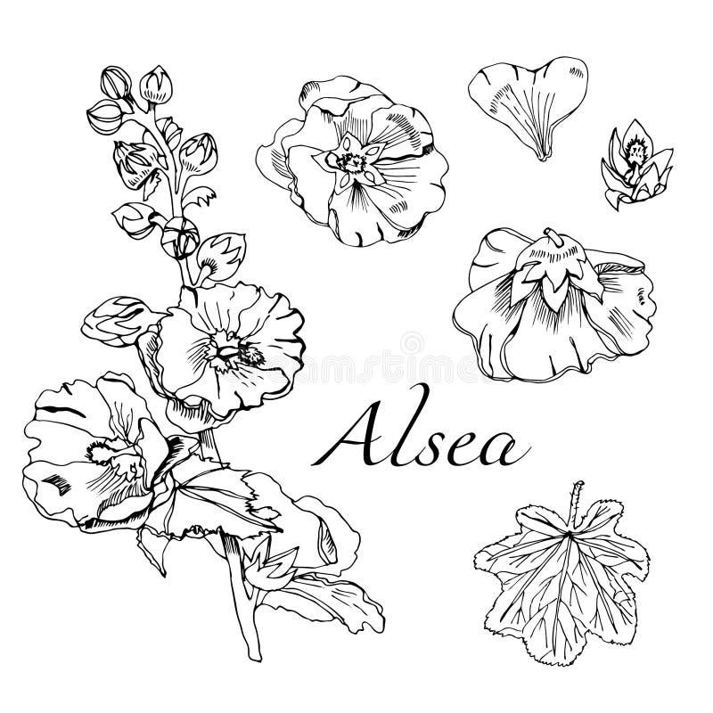 Fijado con el ramo y las solas flores de la malva y de hojas Bosquejo dibujado mano de la tinta Elementos negros de las flores de ilustración del vector