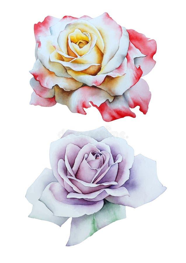 Fijado con las rosas de la acuarela foto de archivo libre de regalías