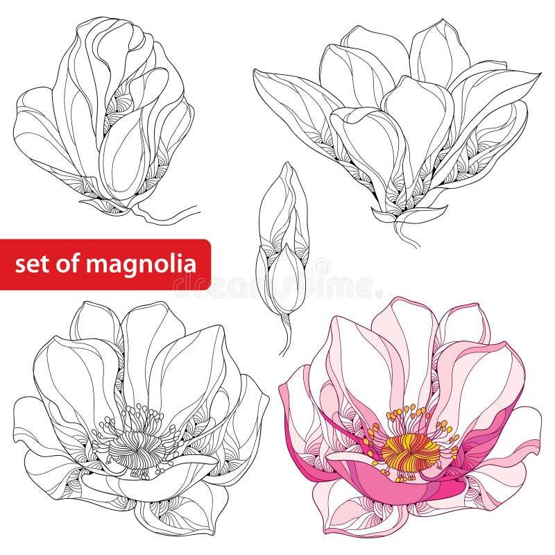 Fije con las flores y los brotes adornados de la magnolia en el fondo blanco Elementos florales en estilo del contorno stock de ilustración