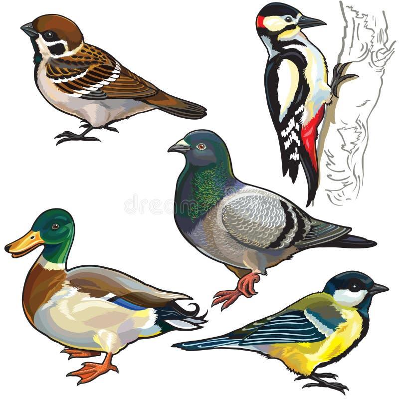 Fije con los pájaros europeos ilustración del vector