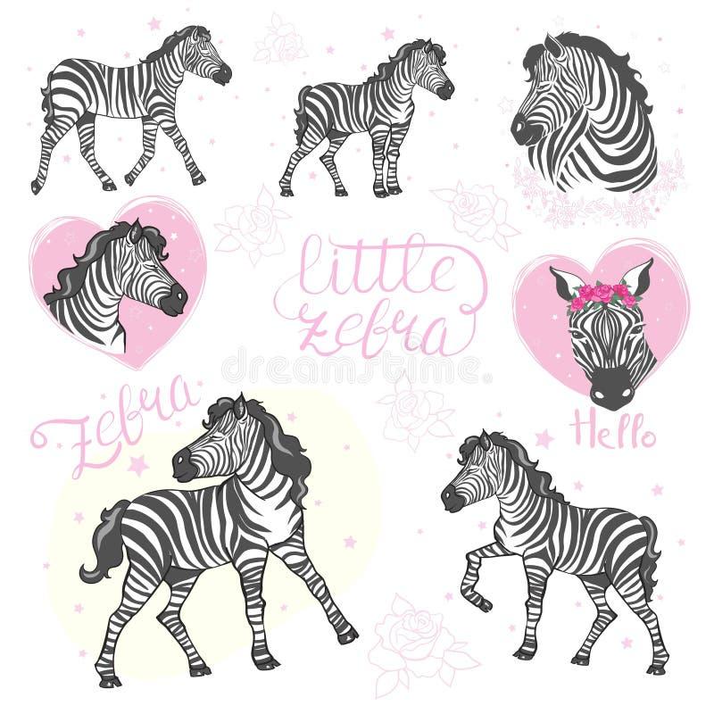 Fije de cebras divertidas de la historieta en el fondo blanco Cebras coloridas lindas del bebé en la bici, con los vidrios y los  libre illustration