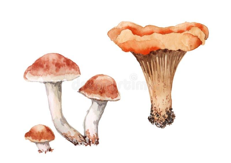 Fije de cuatro setas Tres una del mízcalo setas del Armillaria y acuarela en el fondo blanco stock de ilustración