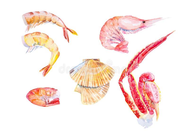Fije de diversos mariscos Camarones, langosta, cangrejo, conchas de peregrino, garras del cangrejo de rey Ejemplo de la acuarela  ilustración del vector