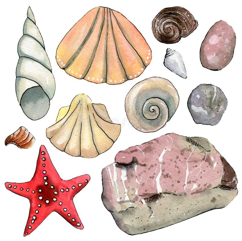 Fije de elementos exhaustos de la acuarela de la mano del viaje con las cáscaras del mar, estrellas de mar, piedras ilustración del vector