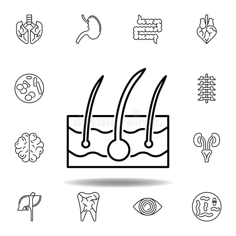 fije de icono del esquema de la epidermis de los órganos humanos Las muestras y los s?mbolos se pueden utilizar para la web, logo stock de ilustración