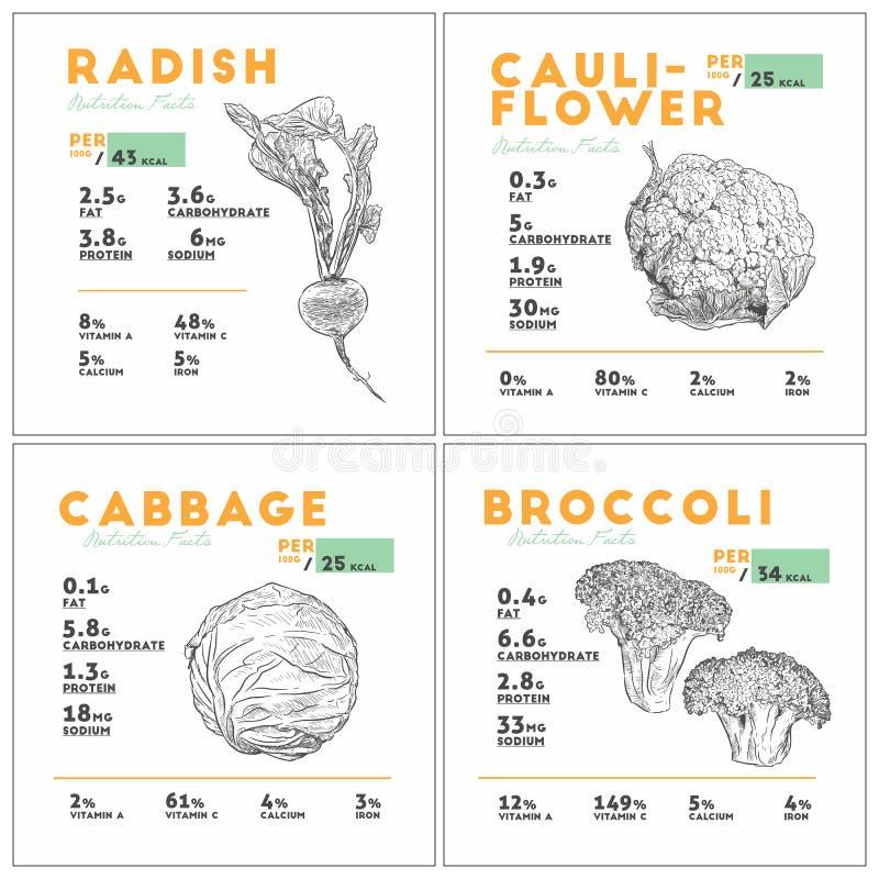 Fije de la verdura, del rábano, de la coliflor, de la col y del bróculi, hea ilustración del vector