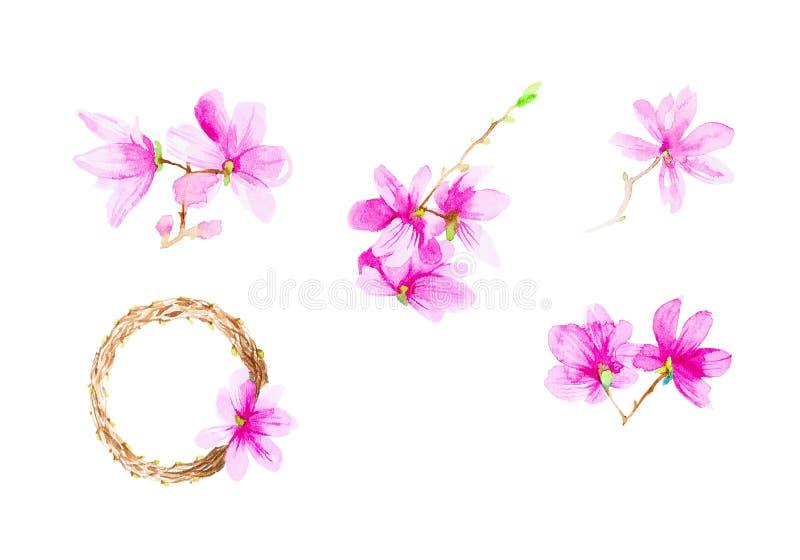 Fije de las flores, de las ramitas y de la guirnalda del ciruelo Ejemplo de la acuarela aislado en el fondo blanco ilustración del vector