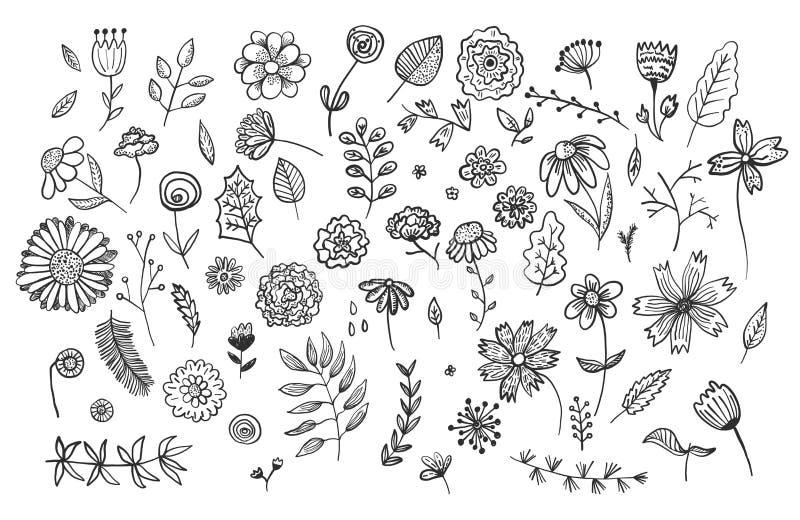 Fije de las flores y de las hierbas exhaustas de la tinta de la mano linda stock de ilustración