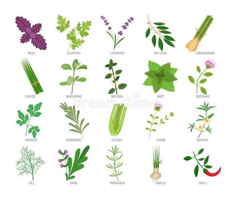 Fije de las hierbas culinarias y de las especias para cocinar, comiendo, comida stock de ilustración