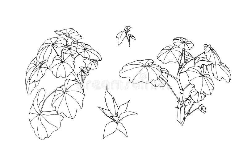 Fije de las hojas exhaustas del esquema de la mano Pintura de la planta por la pluma de la tinta Ejemplo botánico del vector del  libre illustration