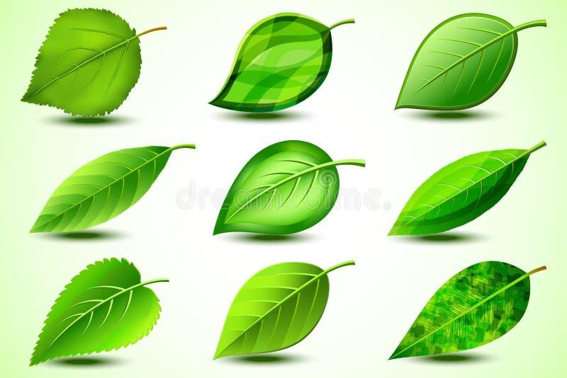 Fije de las hojas frescas verdes aisladas en el fondo blanco imágenes de archivo libres de regalías