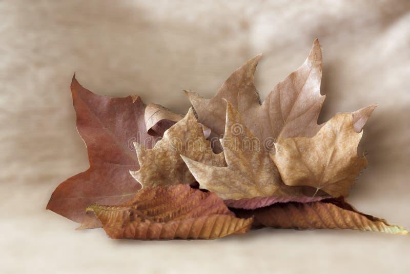 Fije de las hojas de otoño de diversos tamaños en fondo de color claro imágenes de archivo libres de regalías