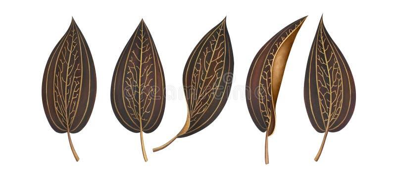 Fije de las hojas tropicales exóticas rayadas aisladas en el fondo blanco stock de ilustración