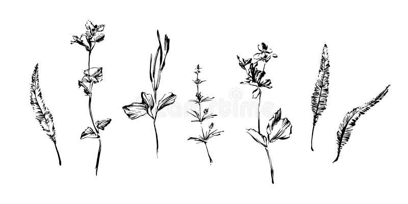 Fije de las plantas exhaustas de la mala hierba de la pintura del cepillo de la mano Elementos abstractos del estilo del Grunge p ilustración del vector
