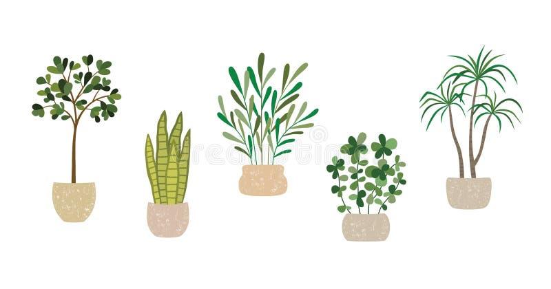 Fije de las plantas interiores de la casa del vector, colección en conserva de las plantas en el fondo blanco stock de ilustración