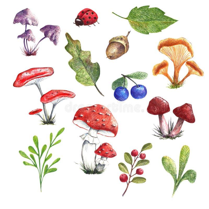 Fije de los elementos exhaustos de la mano, hojas, setas, bayas ilustración del vector