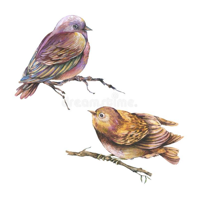 Fije de los pájaros marrones de las acuarelas aislados en el fondo blanco stock de ilustración