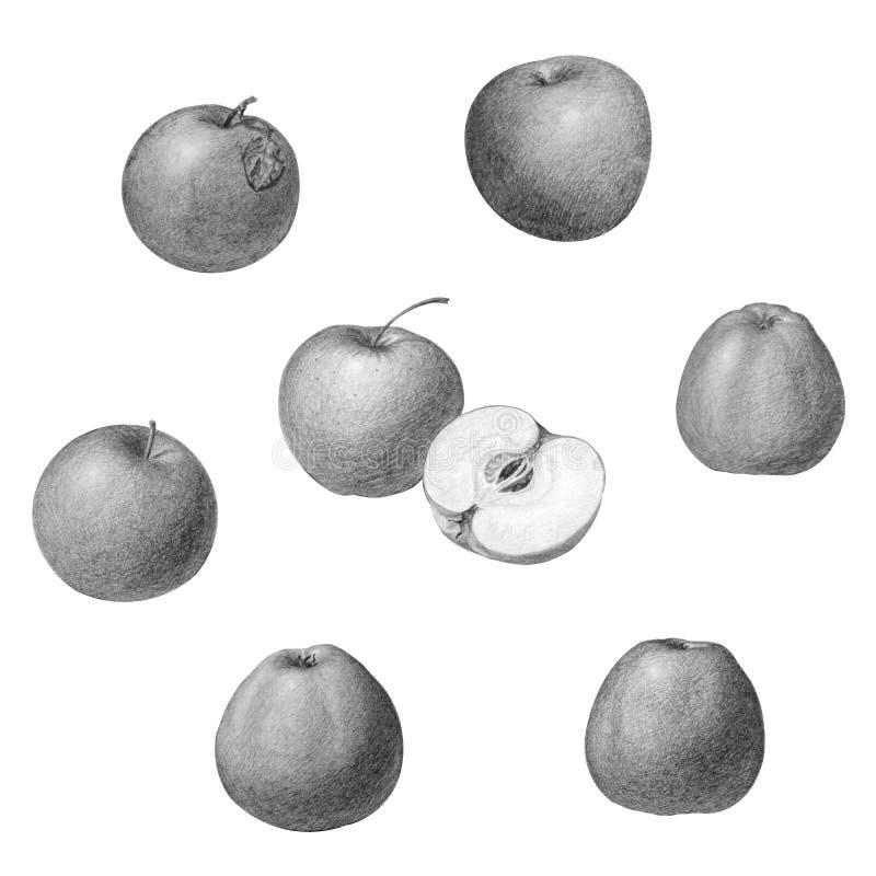Fije de manzanas en diversas posiciones, aislado respecto a blanco stock de ilustración