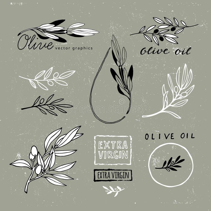 Fije de Olive Branches dibujada mano Formas de la planta del vector Ejemplo para la Virgen adicional Olive Oil Packaging stock de ilustración