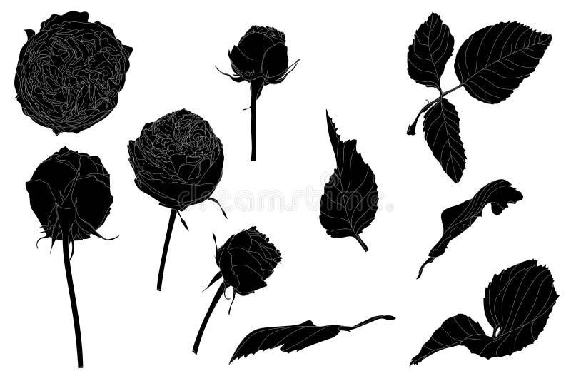 Fije de rosa y de hojas aisladas Estilo dibujado lindo del ejemplo de la flor a disposición ilustración del vector