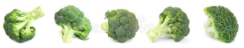 Fije del bróculi verde fresco en blanco Dise?o de la bandera foto de archivo libre de regalías