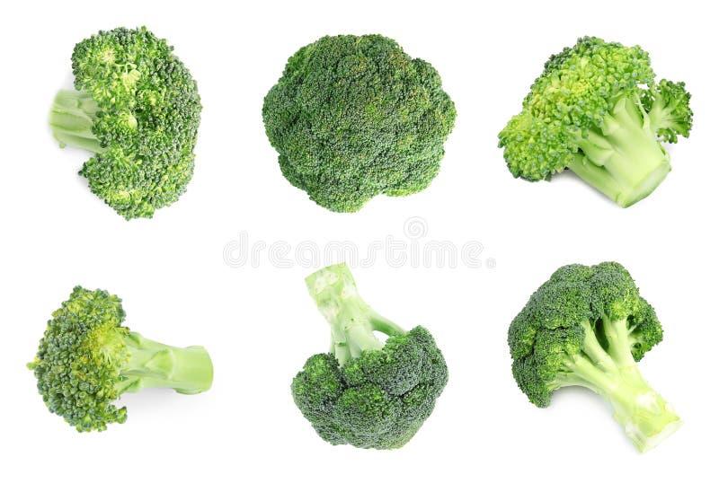 Fije del bróculi verde fresco en blanco fotos de archivo libres de regalías