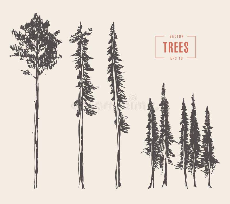 Fije el estilo grabado ejemplo de los árboles de pino dibujado libre illustration