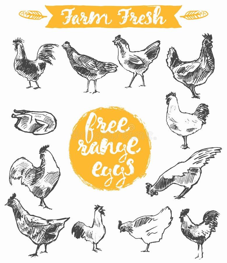 Fije el vector fresco dibujado mano de la carne del pollo de la granja de los huevos libre illustration