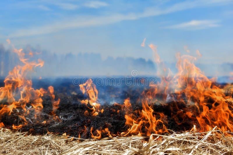 Fije en el fuego. foto de archivo