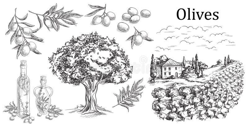 Fije la aceituna El vidrio de la botella y del jarro de líquido con el corcho tapa y ramifica con las hojas Paisaje rural con el  ilustración del vector