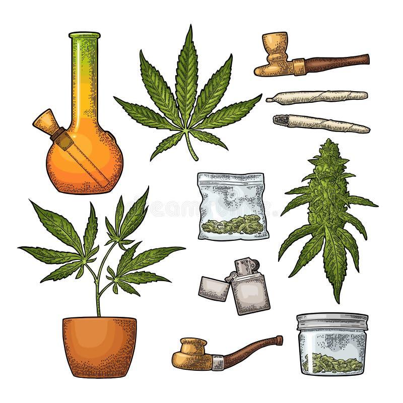 Fije la marijuana Grabado del vector del color del vintage stock de ilustración