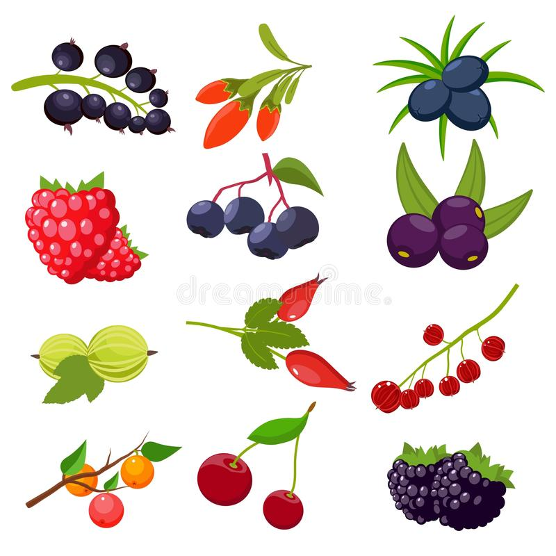 Fije las bayas aisladas en el fondo blanco: pasa, cereza, frambuesas, serbal, grosella espinosa, dogrose, zarzamora, goji ilustración del vector