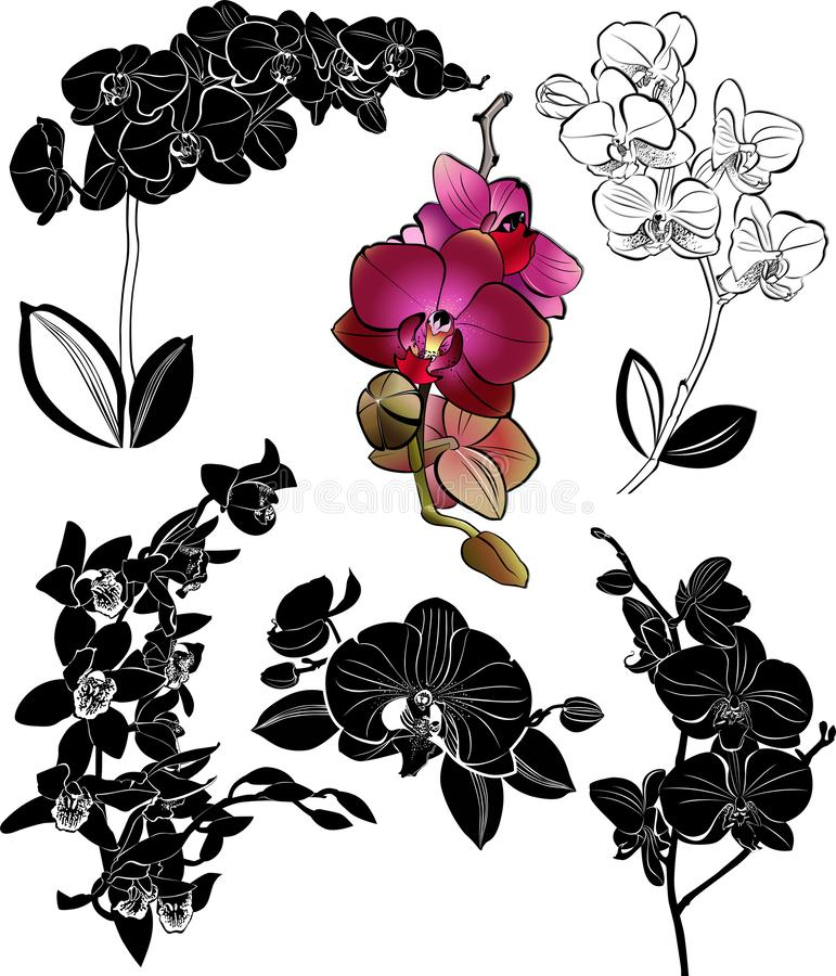 Fije las flores de las orquídeas que se aísla ilustración del vector