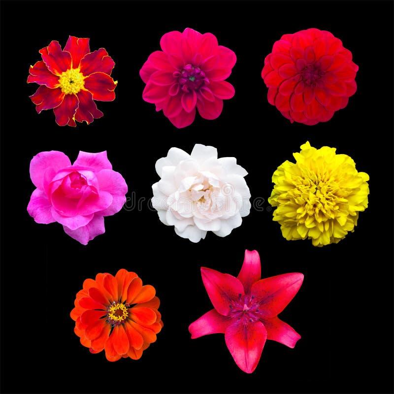 Fije las flores del jardín aisladas maravilla, Dahlir Lirio y zinnia fotografía de archivo