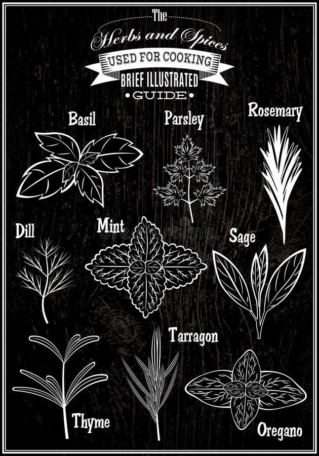 Fije las hierbas de la planta de las imágenes del vector para cocinar ilustración del vector