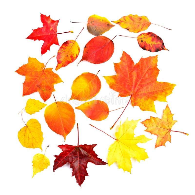 Fije las hojas coloridas de la caída del otoño de la colección fotos de archivo