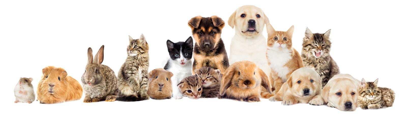 Fije los animales domésticos foto de archivo