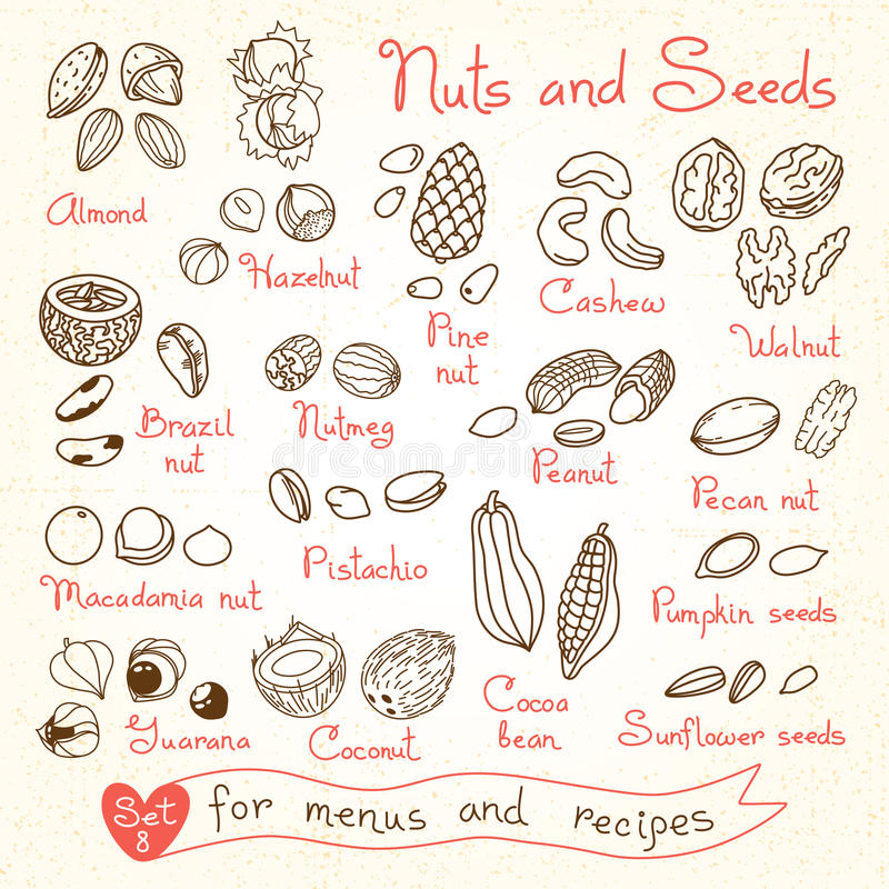 Fije los dibujos de nueces y de semillas para los menús del diseño stock de ilustración